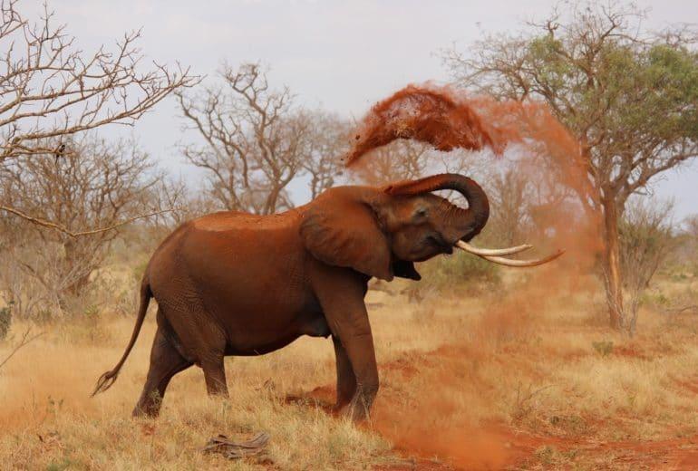 africa animal elephant 70080 770x520