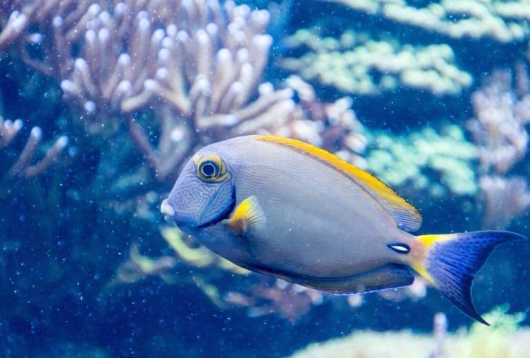animal aquarium aquatic 60090 770x520