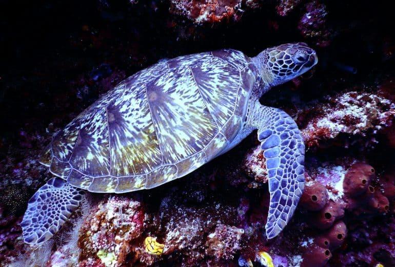 animal aquarium aquatic 668867 770x520