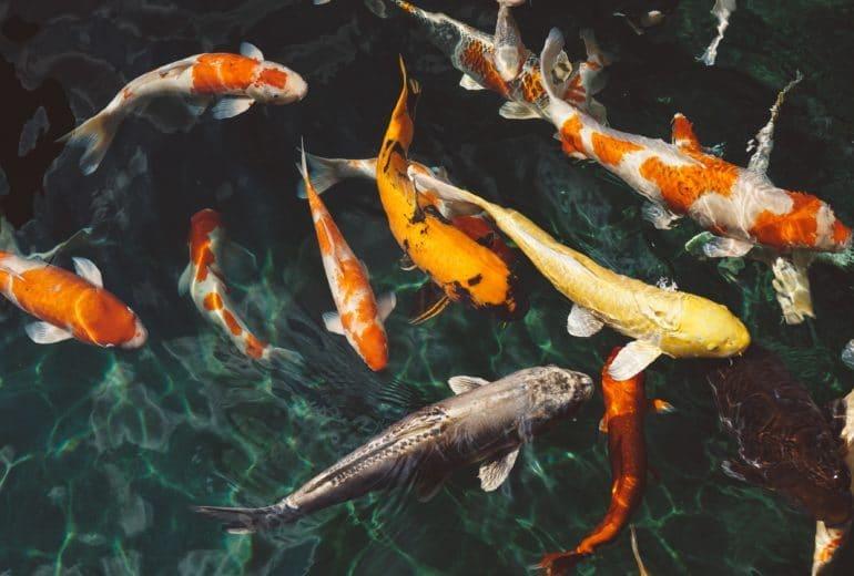 animals fish fishes 213399 770x520
