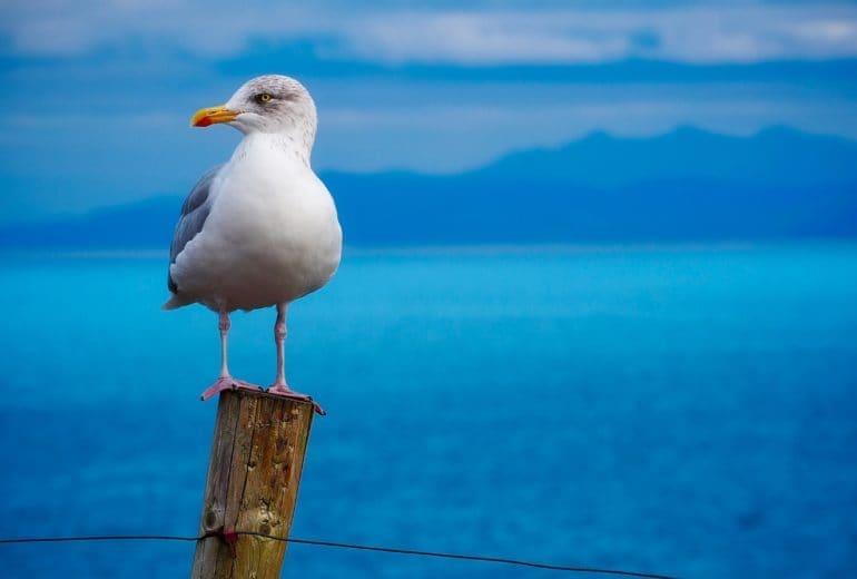 beach gull macro 260757 770x520